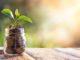 flowe concept green bank
